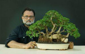 Presentarán exposición de bonsáis con más de 60 muestras