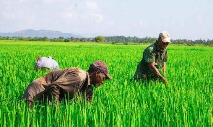450 productores agropecuarios son beneficiados por elInespre