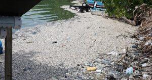 BARAHONA: Miles peces muertos aparecen en el muelle del puerto